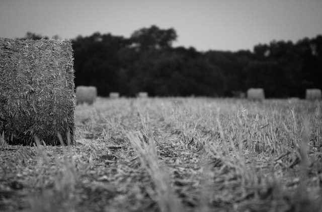 "What Creditors Need to Know About Chapter 12 ""Family Farmer"" Bankruptcy"